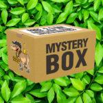 Dry Herb Mystery Smokers Box